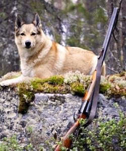 Собака и ружьё